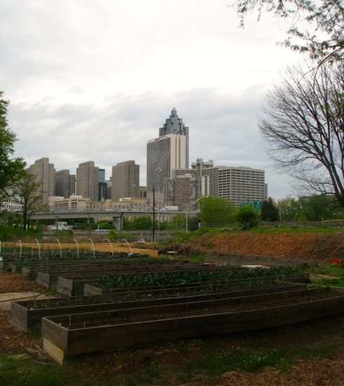 The skyline beyond the garden.