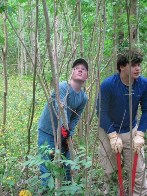 St. Louis eighth graders located and take down Chinese tallow, which causes havoc in the wetlands.